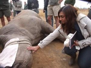 With Rhino2