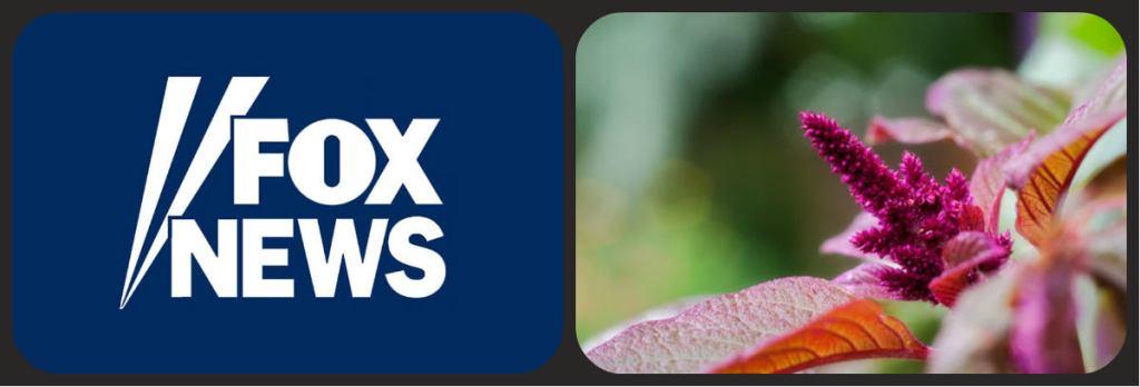 foxnews1
